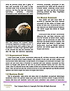 0000088803 Word Templates - Page 4