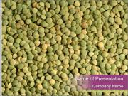Green Legume PowerPoint Templates