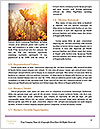 0000088837 Word Template - Page 4