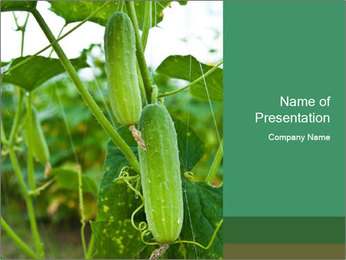 Cucumbers In Greenhouse PowerPoint Template