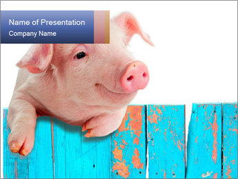 Cute Pink Piggy PowerPoint Template - Slide 1