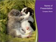 Cuddling Kittens PowerPoint Templates