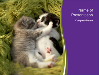 Cuddling Kittens PowerPoint Template - Slide 1