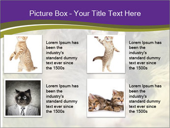 Cuddling Kittens PowerPoint Template - Slide 14