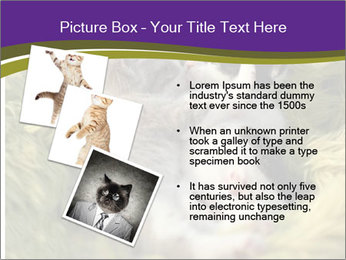 Cuddling Kittens PowerPoint Template - Slide 17