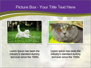 Cuddling Kittens PowerPoint Template - Slide 18