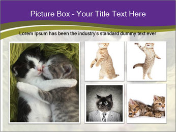 Cuddling Kittens PowerPoint Template - Slide 19