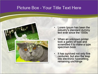 Cuddling Kittens PowerPoint Template - Slide 20