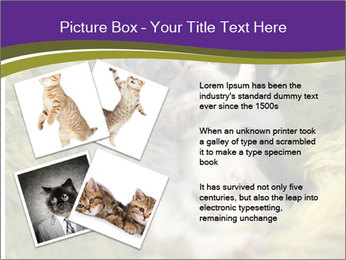 Cuddling Kittens PowerPoint Template - Slide 23