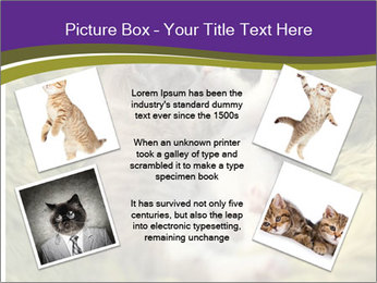 Cuddling Kittens PowerPoint Template - Slide 24