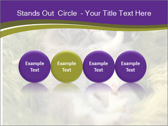 Cuddling Kittens PowerPoint Template - Slide 76