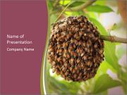 Bee Nest PowerPoint Template