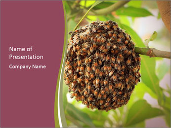 Bee Nest PowerPoint Template - Slide 1