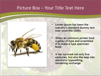 Bee Nest PowerPoint Template - Slide 13