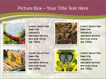 Bee Nest PowerPoint Template - Slide 14