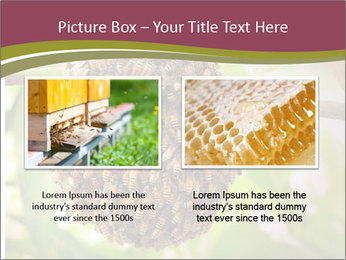 Bee Nest PowerPoint Template - Slide 18