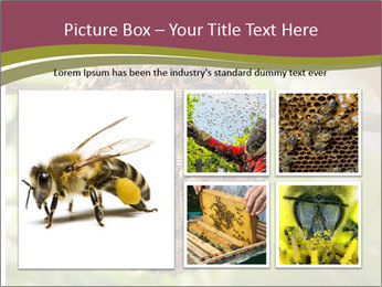 Bee Nest PowerPoint Template - Slide 19