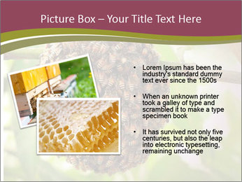 Bee Nest PowerPoint Template - Slide 20