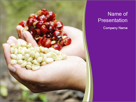 Coffee Beans In Palms PowerPoint Template