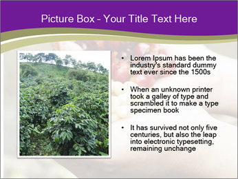 Coffee Beans In Palms PowerPoint Template - Slide 13