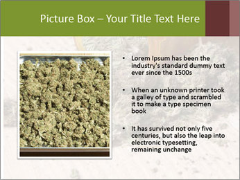 Ganja PowerPoint Template - Slide 13
