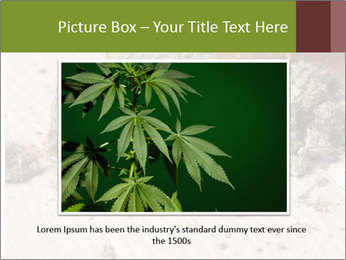 Ganja PowerPoint Template - Slide 16
