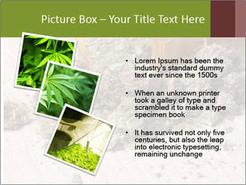Ganja PowerPoint Template - Slide 17