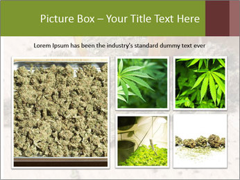 Ganja PowerPoint Template - Slide 19