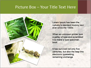 Ganja PowerPoint Template - Slide 23
