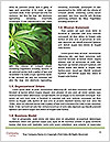 0000088870 Word Templates - Page 4