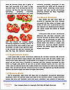 0000088891 Word Templates - Page 4
