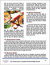 0000088901 Word Template - Page 4