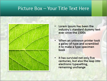 Green Grass In Garden PowerPoint Template - Slide 13
