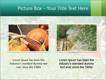 Green Grass In Garden PowerPoint Template - Slide 18