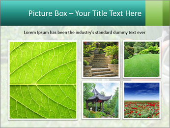 Green Grass In Garden PowerPoint Template - Slide 19