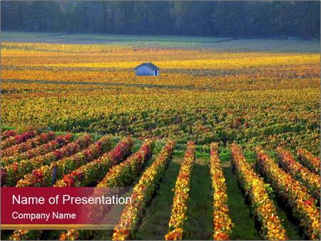 French Viniculture PowerPoint Template