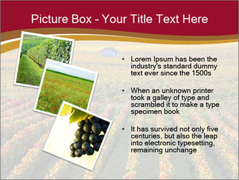 French Viniculture PowerPoint Template - Slide 17
