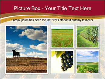 French Viniculture PowerPoint Template - Slide 19
