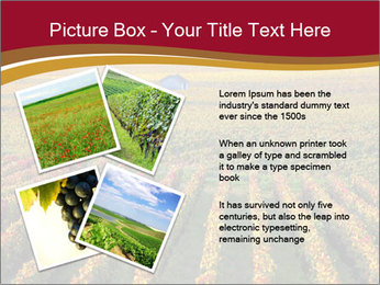 French Viniculture PowerPoint Template - Slide 23
