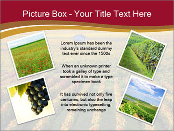 French Viniculture PowerPoint Template - Slide 24