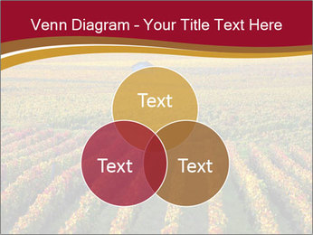 French Viniculture PowerPoint Template - Slide 33