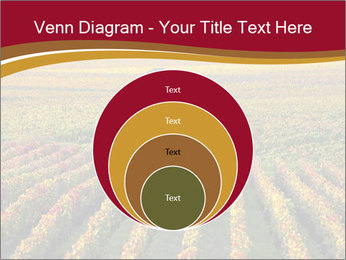 French Viniculture PowerPoint Template - Slide 34