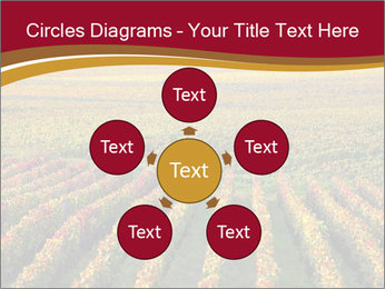 French Viniculture PowerPoint Templates - Slide 78