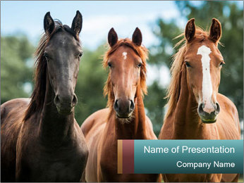 Three Beautiful Horses PowerPoint Template - Slide 1