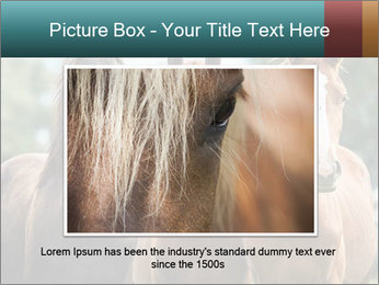 Three Beautiful Horses PowerPoint Template - Slide 15
