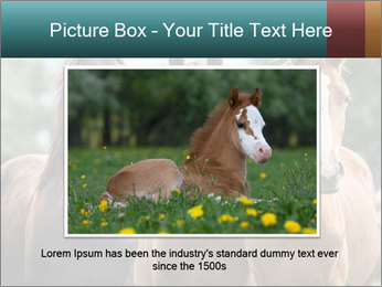 Three Beautiful Horses PowerPoint Template - Slide 16