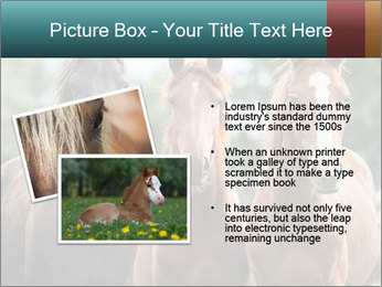 Three Beautiful Horses PowerPoint Template - Slide 20