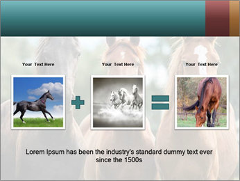 Three Beautiful Horses PowerPoint Template - Slide 22