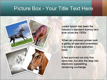 Three Beautiful Horses PowerPoint Template - Slide 23