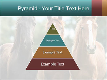 Three Beautiful Horses PowerPoint Template - Slide 30